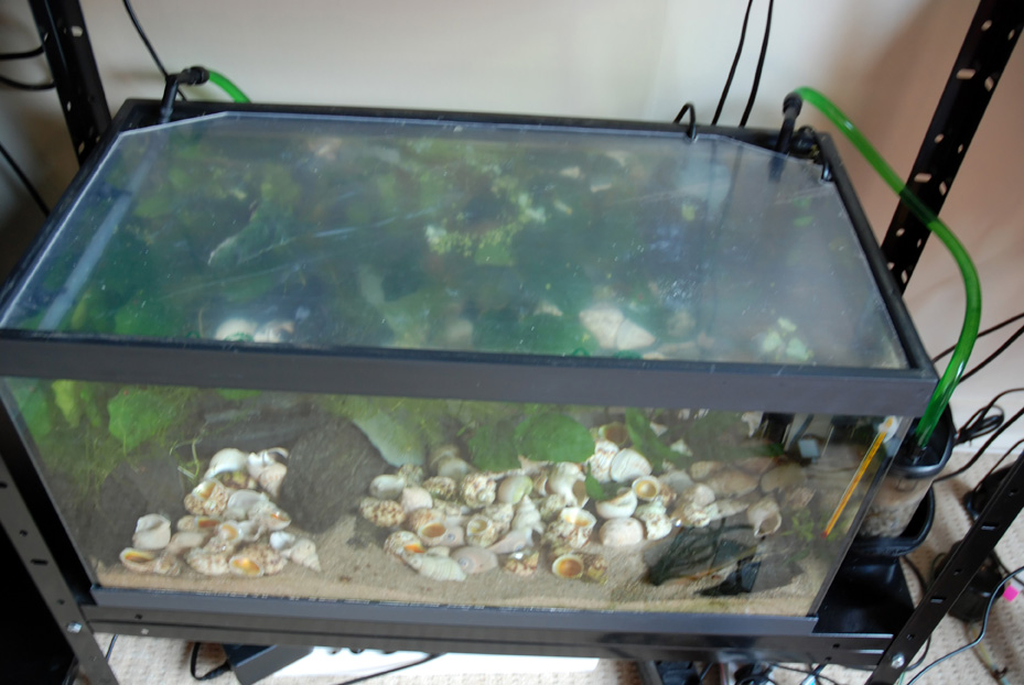 photo https://www.aquariophilie.org/pecky/public/pics/bricolage/LED/54Ltanga/DSC_0245.jpg