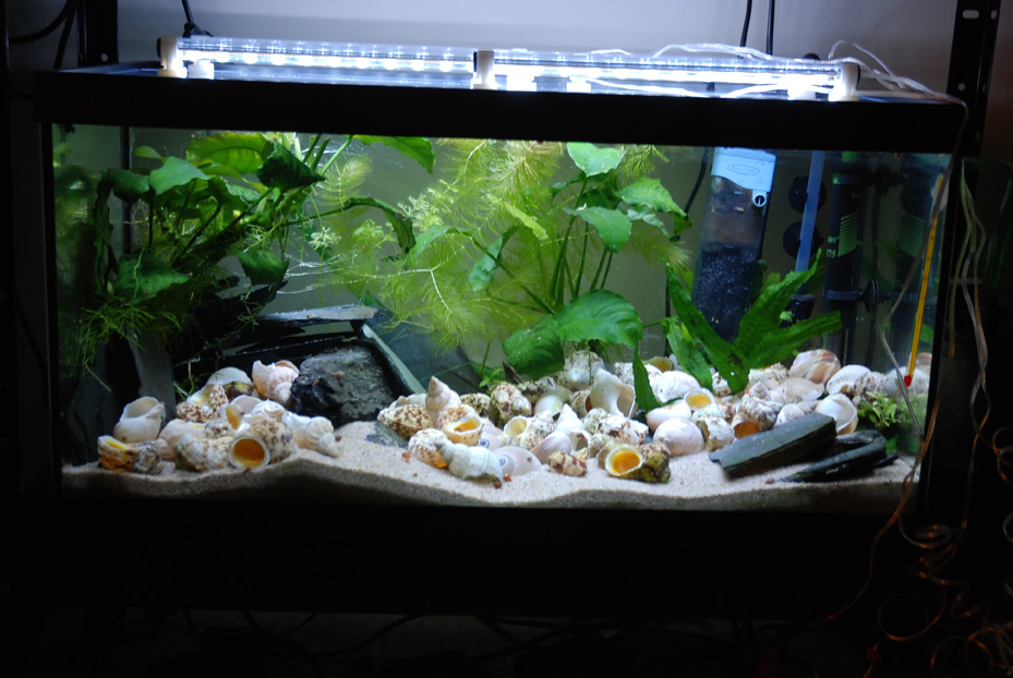 photo https://www.aquariophilie.org/pecky/public/pics/bricolage/LED/54Ltanga/DSC_0264.jpg