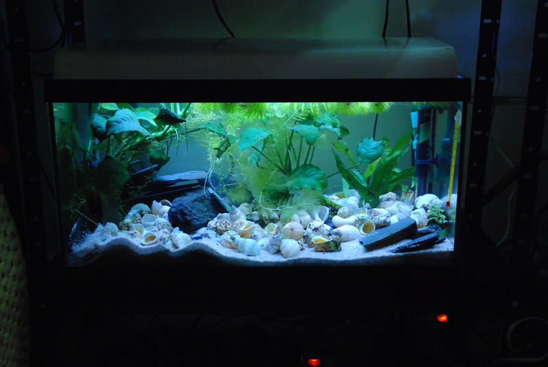 photo https://www.aquariophilie.org/pecky/public/pics/bricolage/LED/54Ltanga/DSC_0410.jpg